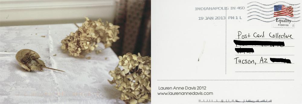 Lauren Anne Davis