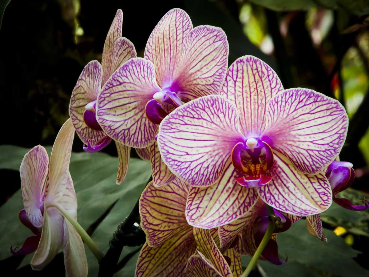 Keen-EyePhoto-dot-com_Flowers (10).jpeg