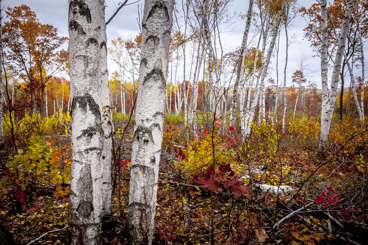 Fall in the Nince Mile Recreation area. Mountain Bike Trails just outside of Wausau.