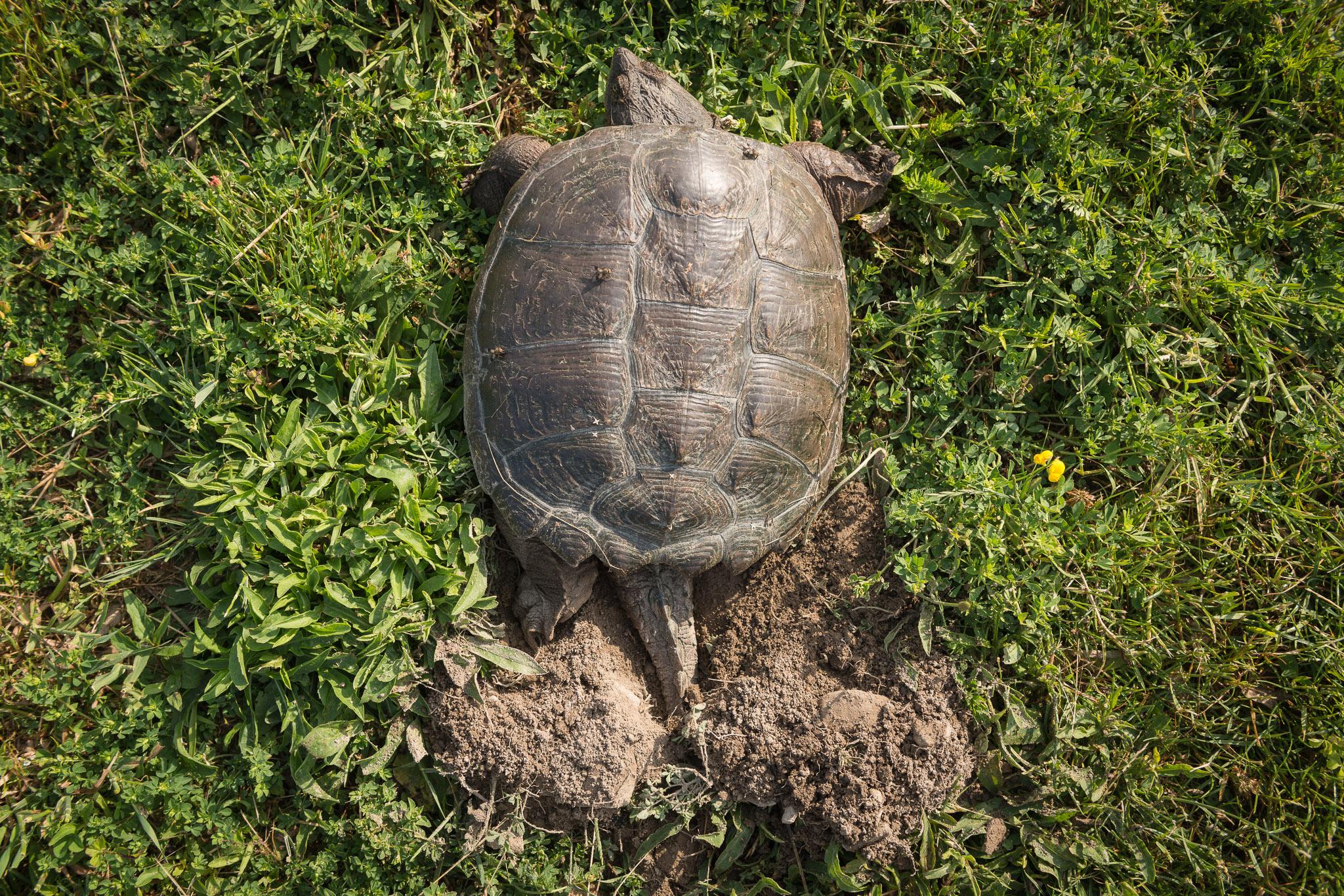 2016-06-20-JeremyJeziorski-Turtle-web-02.jpg