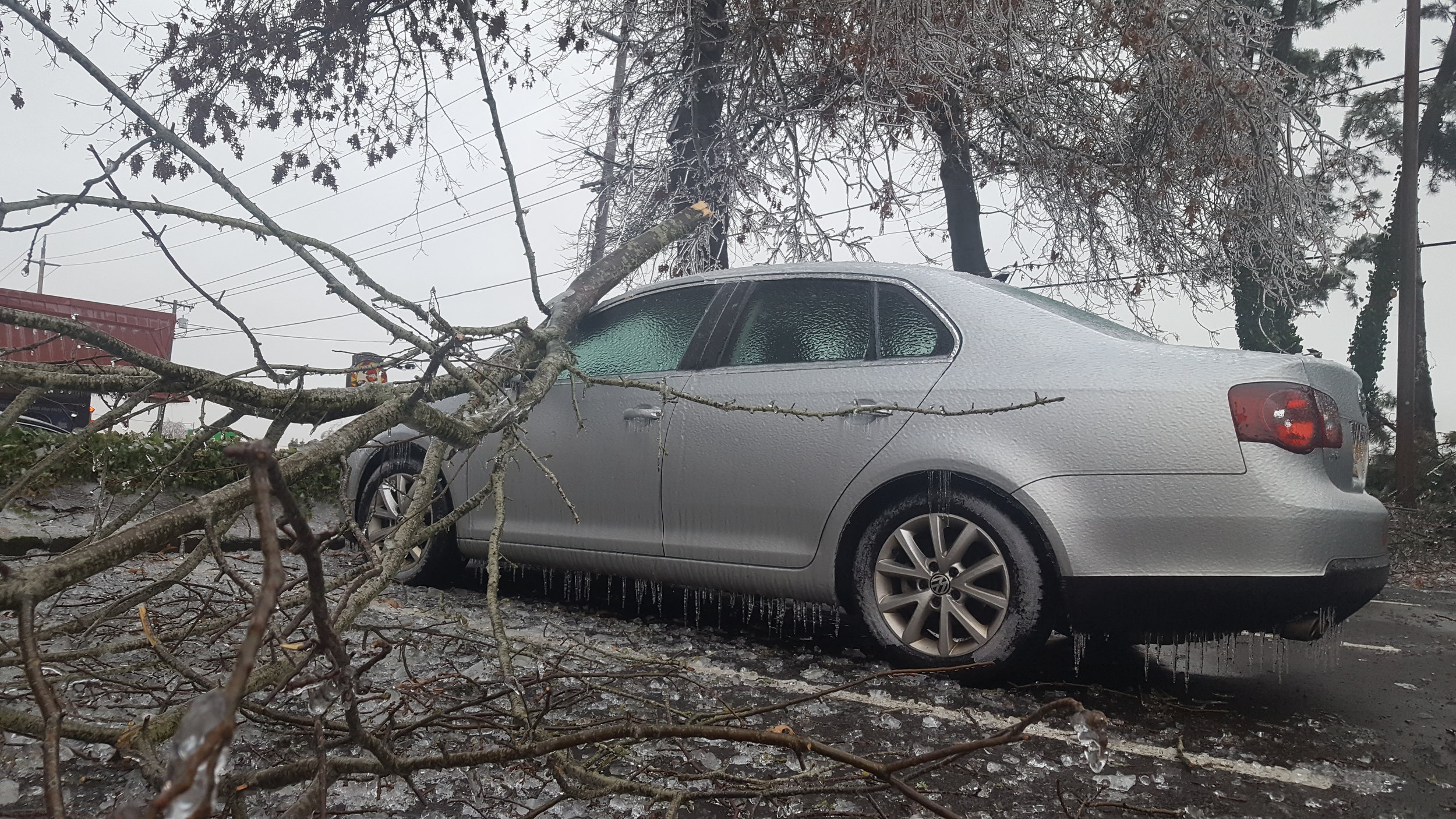 Including this particularly heavy limb on my car. The Jetta needed some more, denty character, anyway!