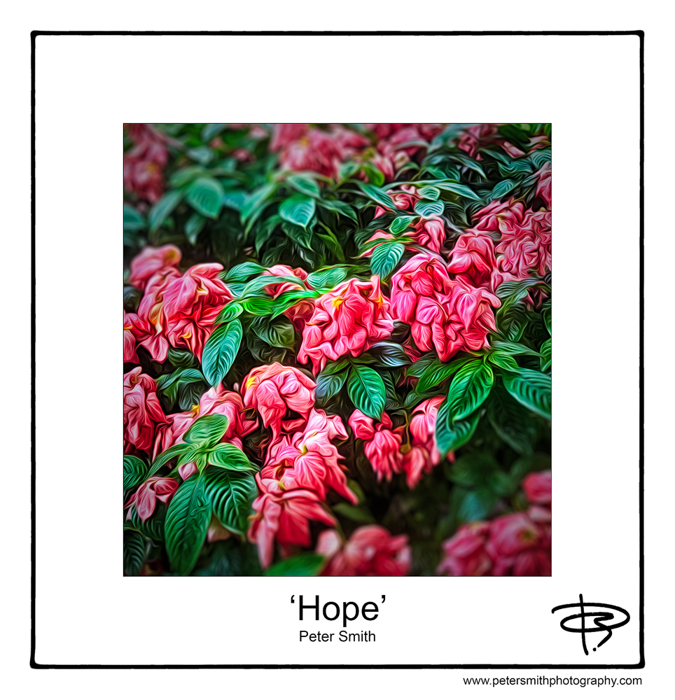 Number 22, 2014, 'Hope'