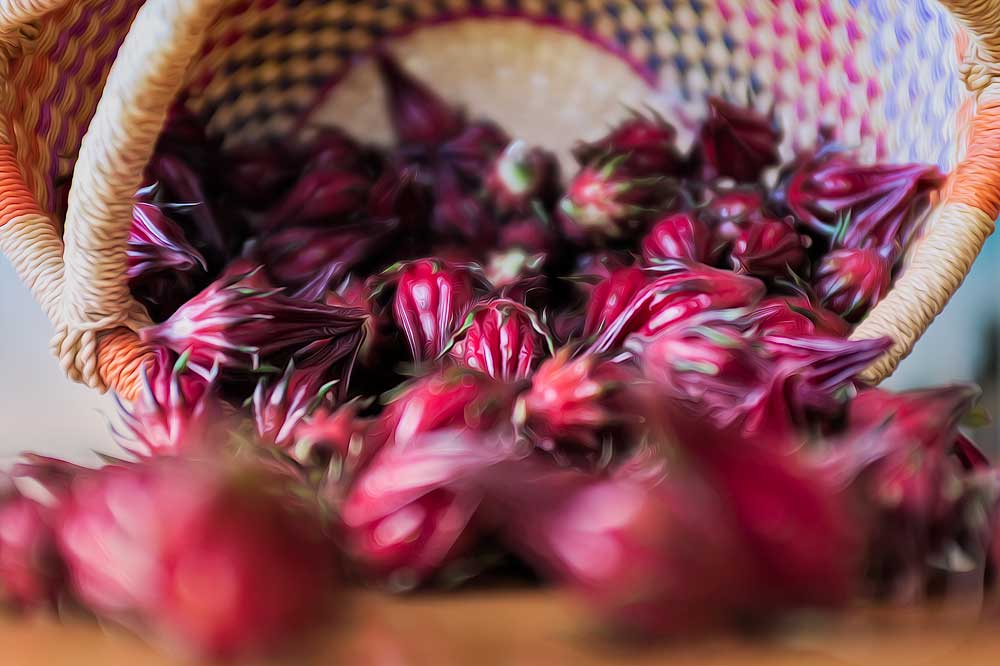 The best fruit for jam, 'The Native Hibiscus'
