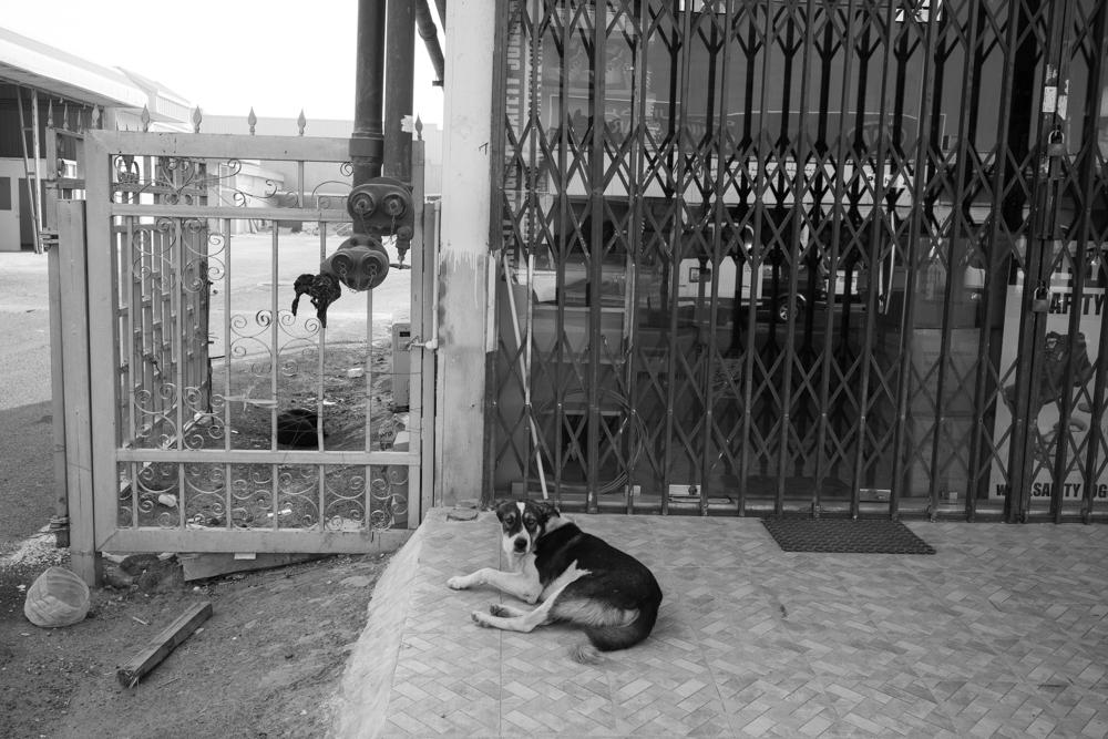 Street Photography-67912.jpg