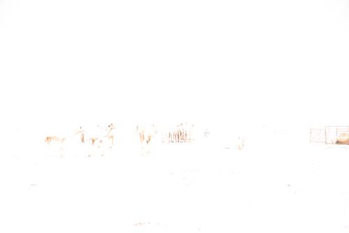 337_L1000846-2.jpg