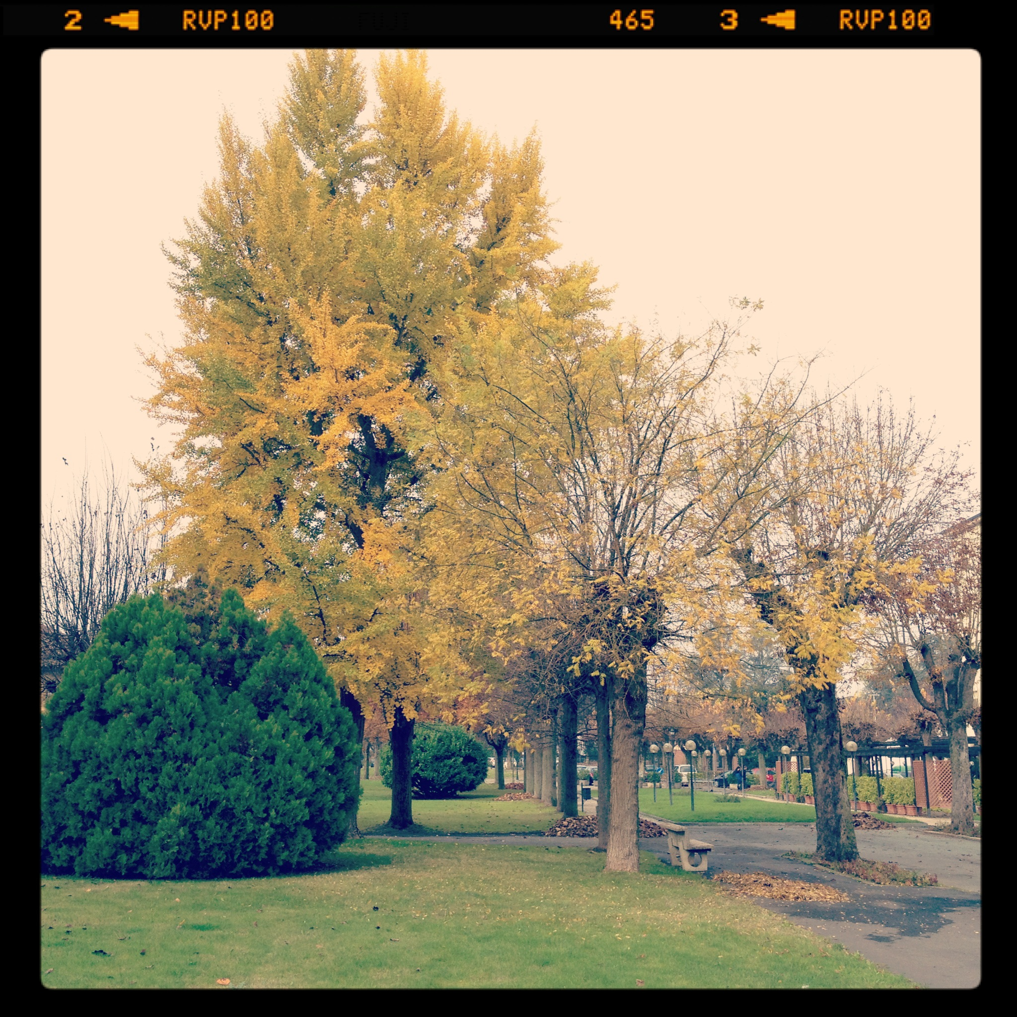 2011-11-12 10.48.00.jpg