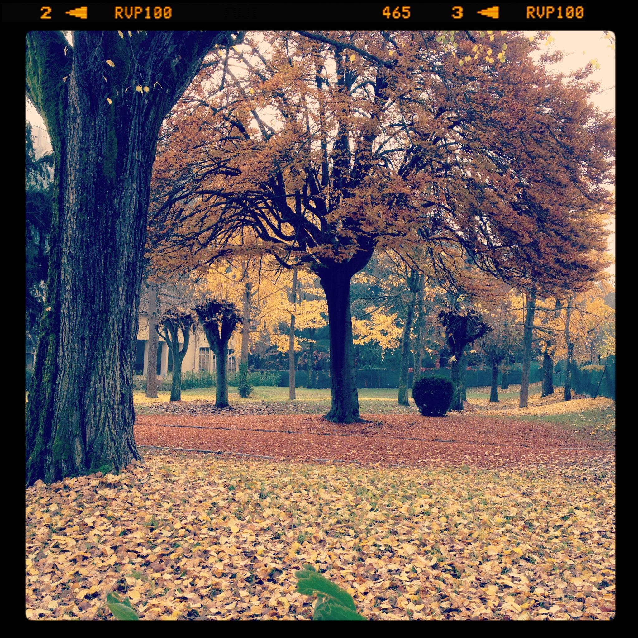 2011-11-12 11.03.04.jpg