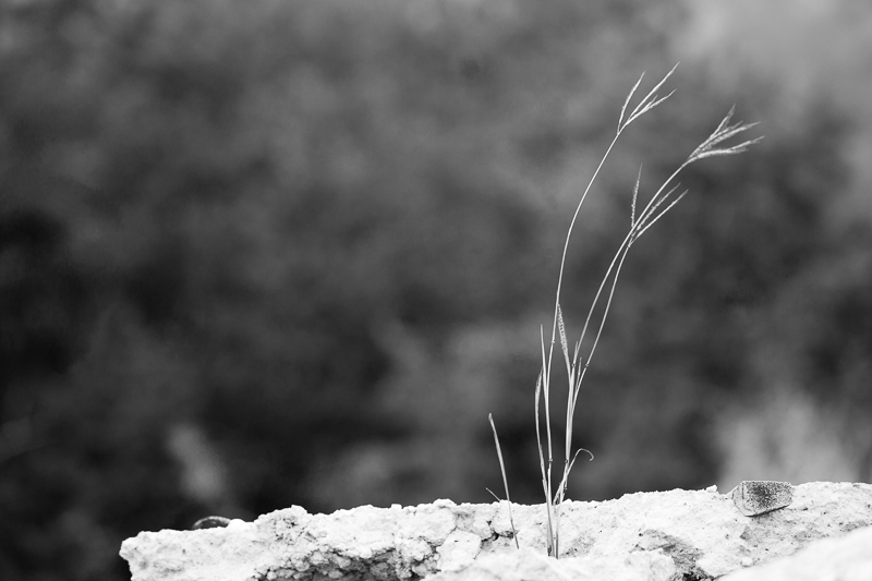 grass in rock
