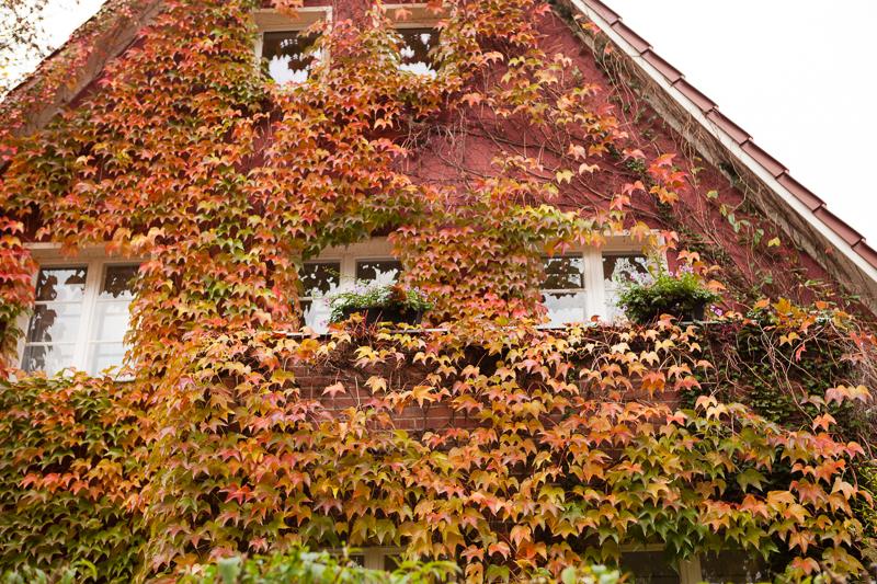 leaf covered house krumme lanke