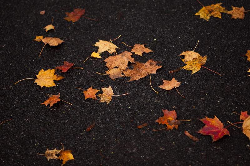 autumn leaves on black road