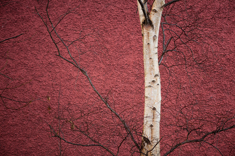 red wall white tree