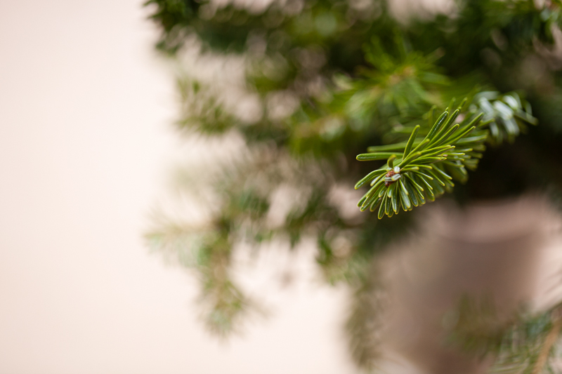 pine in vase