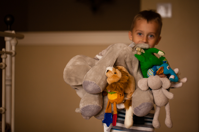 sage and stuffed animals