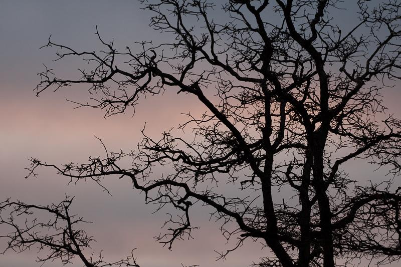 sunday tree