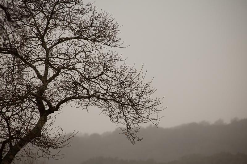 tree like bw