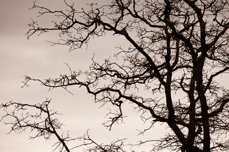 wf tree 320