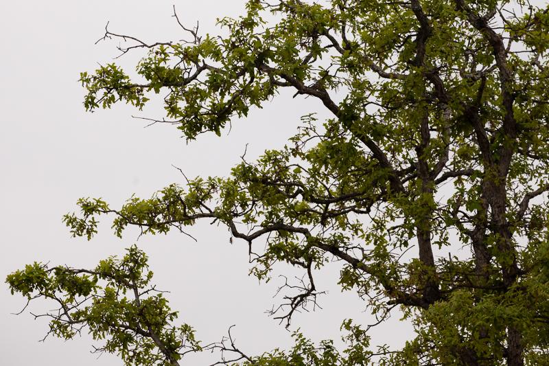 wf tree leaves 411