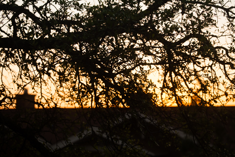 sunset 414