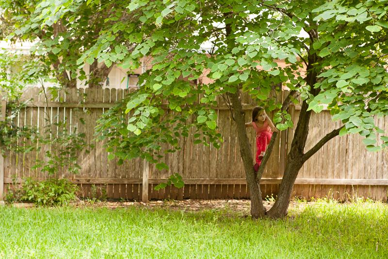 seena tree 504
