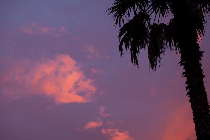 palm sunset 513