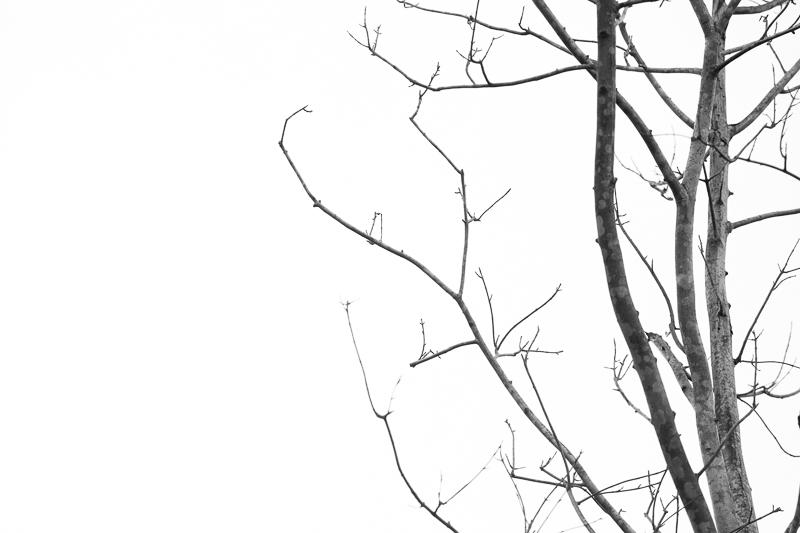 bw bare tree 528