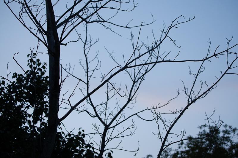 dead tree 0702