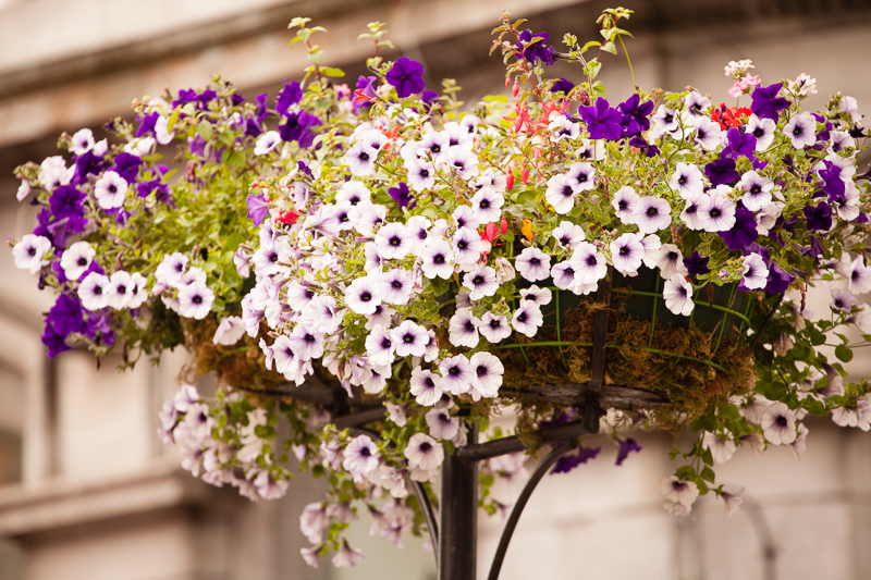 summer flowers ennis