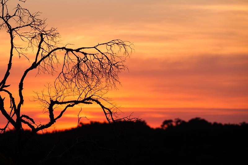 orange sky tree