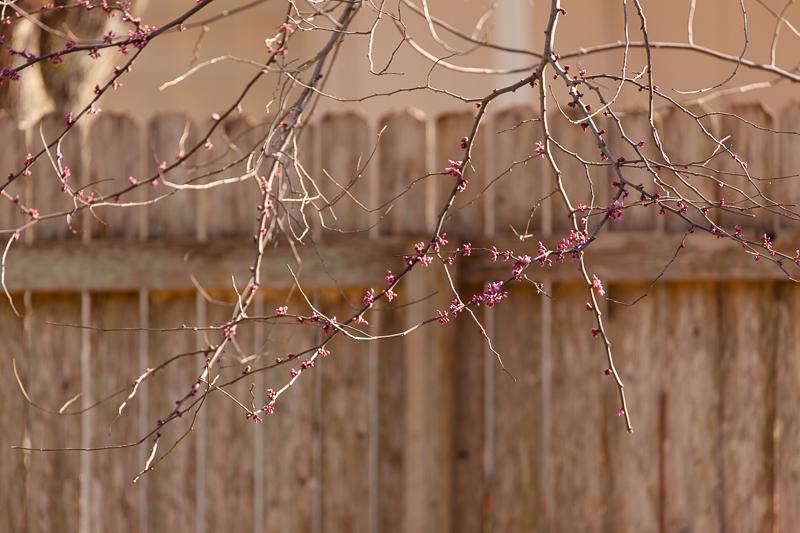 spring beginnings