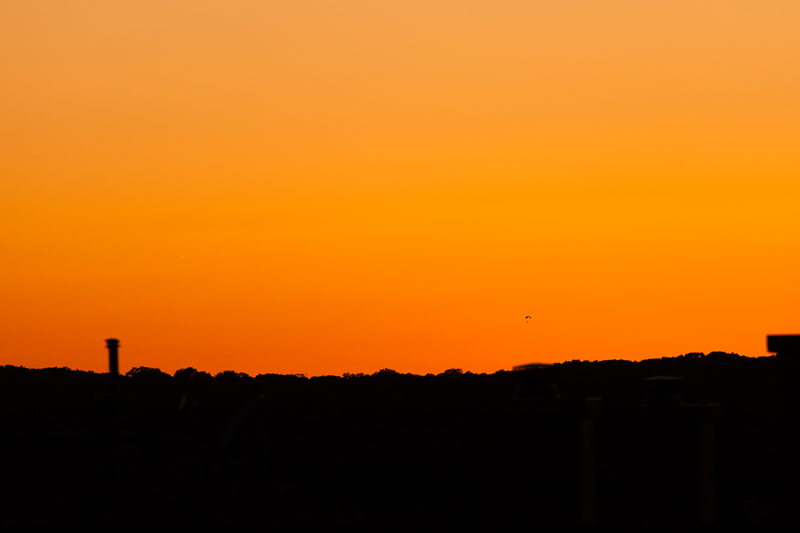 Tonight's orange sunset with a hang glider in the distance.