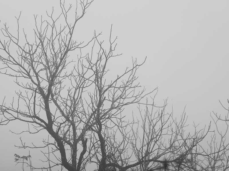 foggy sunday