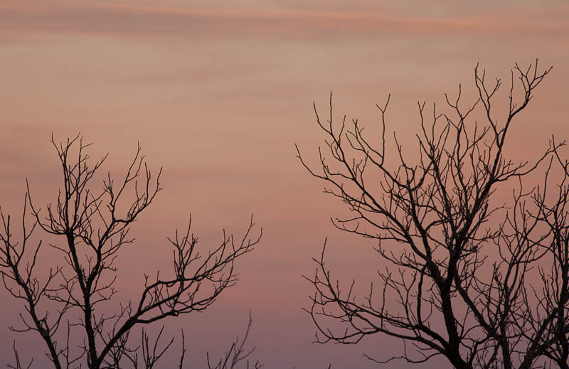 sunset trees 12182016