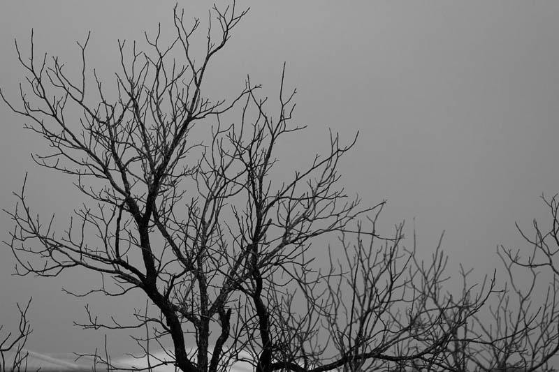 winter trees bw 01052017