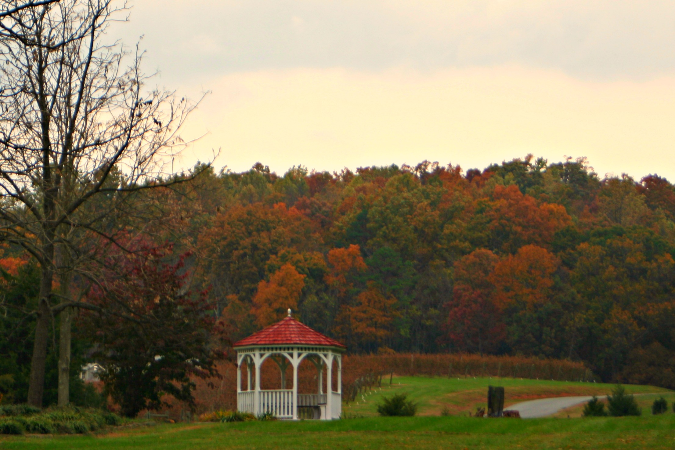 Autumn view of the gazebo overlooking Pippin Hill Vineyard
