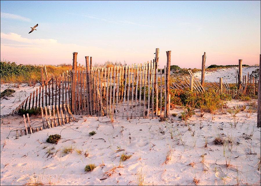 Dunes of Long Beach Island