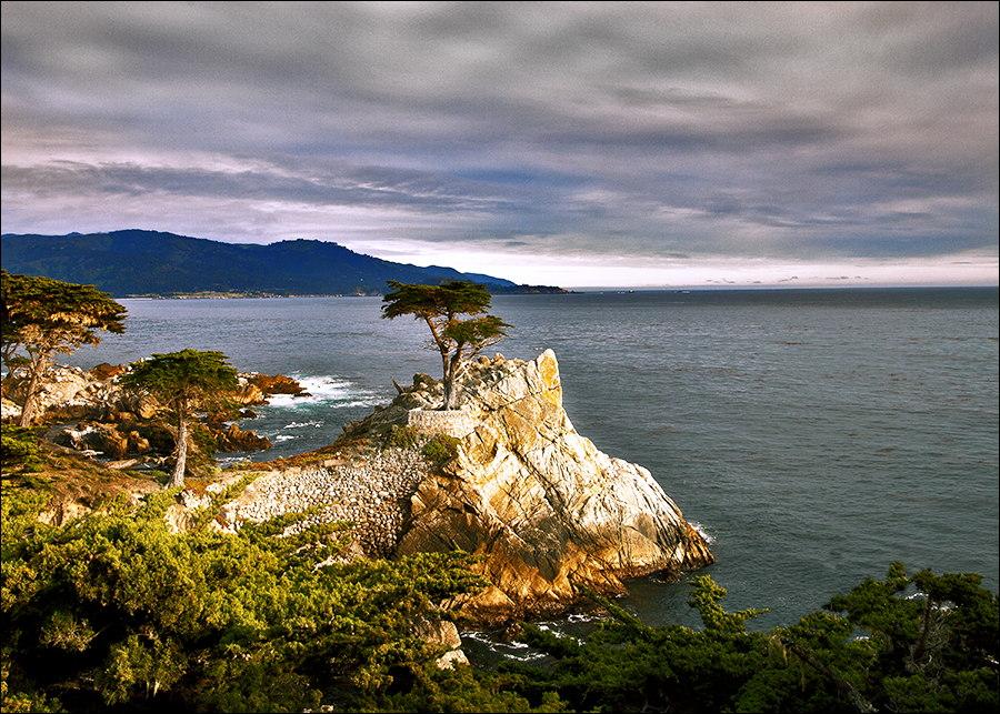Monterey-Lone Cypress Tree.jpg