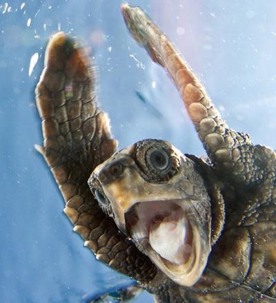 awesome-turtle.jpg