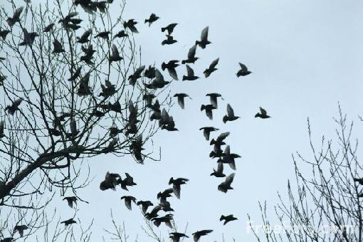 flock_of_birds-166.jpg