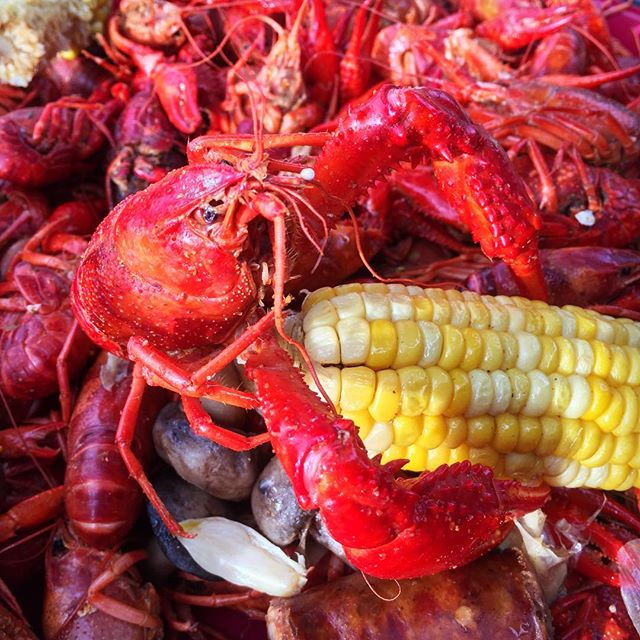 Meanwhile in Louisiana, everyone around me is devouring their crawfish as though it's going to crawl back into a mud hole while I'm peeling slower than a decoupager watching a Martha Stewart marathon. #crawfish #crawfishboil #louisiana #louisianaseafood #marthastewart