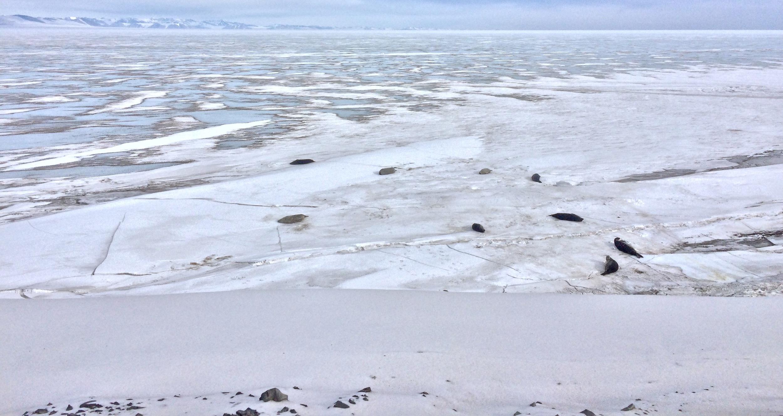 More seals.