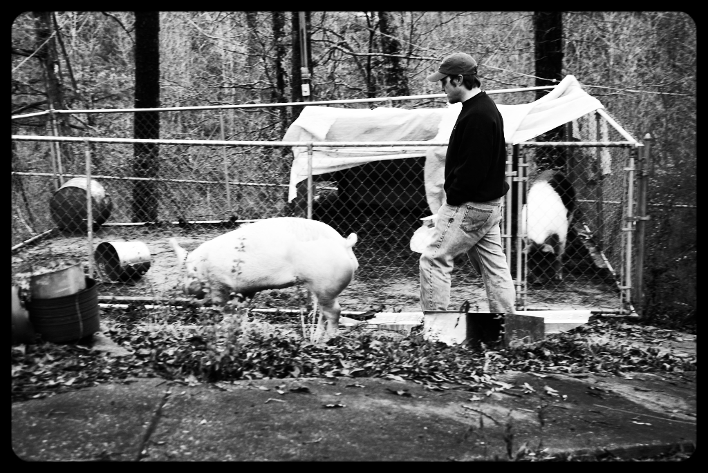 Sean with his pig named Dinner on the day of reckoning. Lunch stands in the background. Photo: Charlene Dy
