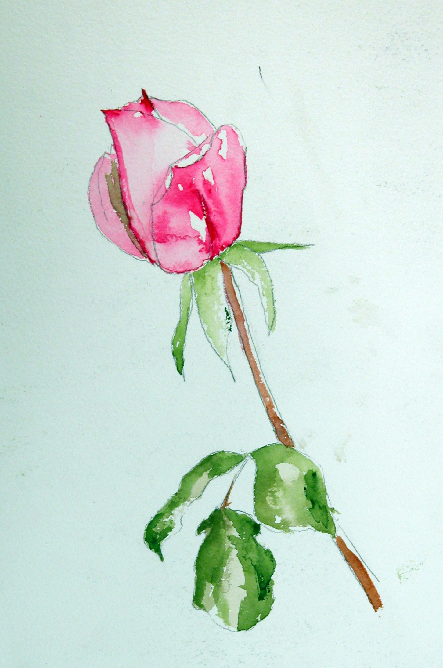 red rose rross.jpg