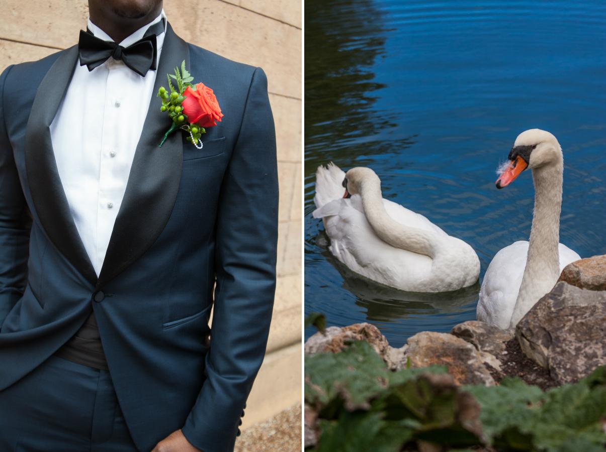 groom and swan