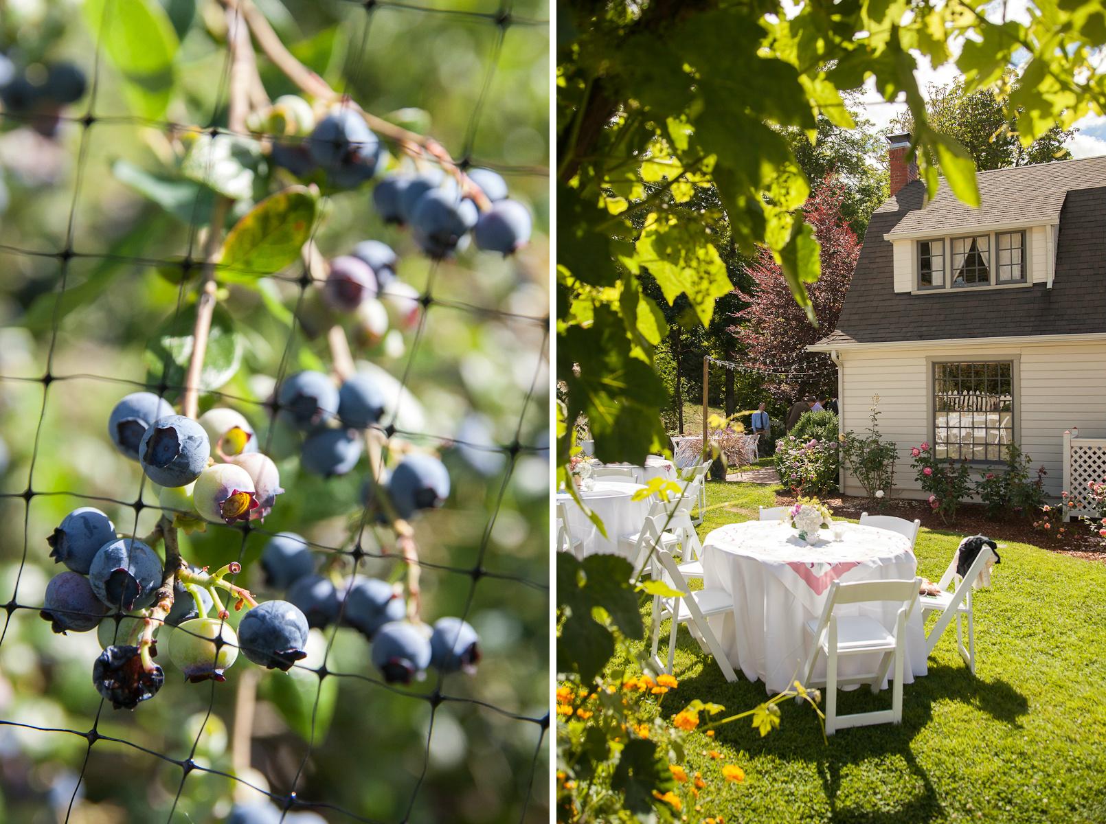 oregon garden wedding blueberries