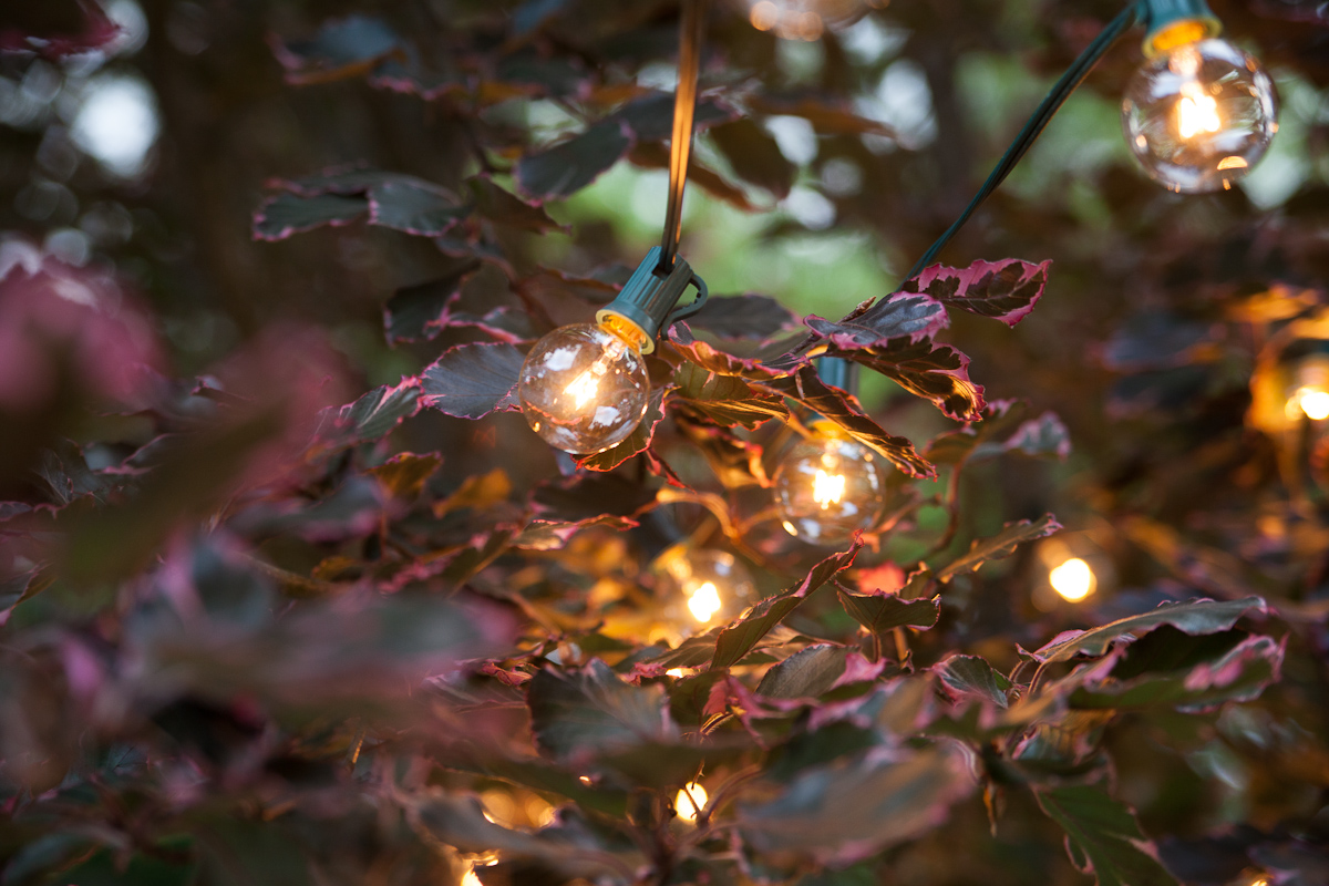 ivy and twinkle lights