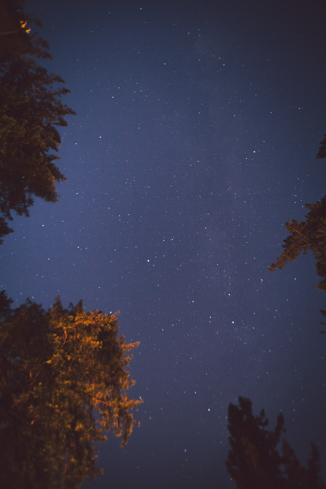 redwood galaxy