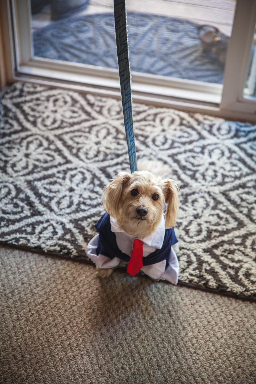 dog ring bearer suit tie