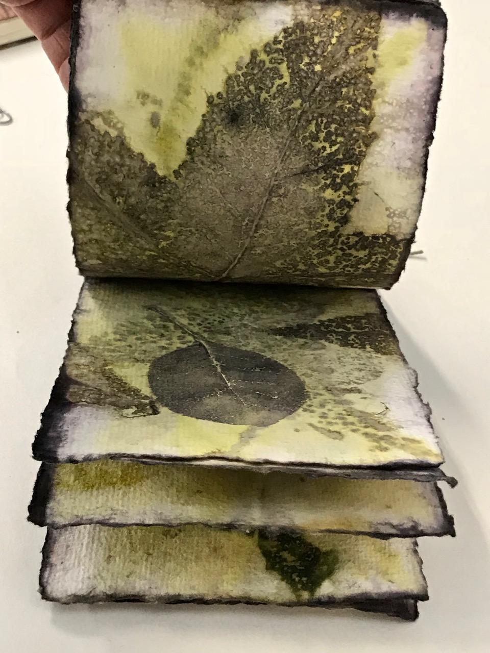 Jude EcoP Book -Smoke B (1).jpg