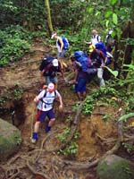kokoda trekkers tree roots.jpg