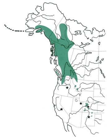 Approximate distribution of white-tailed ptarmigan in western North America. Stars show locations where white-tailed ptarmigan have been introduced into previously-unoccupied habitats (Sierra Nevada Mountains, CA; Wallowa Mountains, OR; Uinta Mountains, UT; and Pikes Peak, CO) or reintroduced into formerly occupied habitats (northern New Mexico).